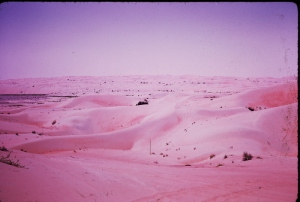 the Liwa...desert beyond Abu Dhabi